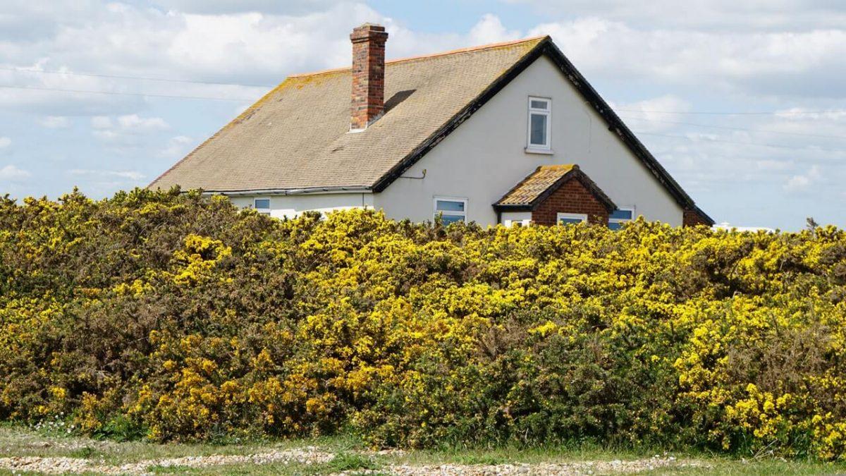 Dom ogrodzony zielony żywopłotem